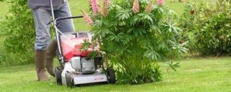 Jardinage bricolage vitr foug res la guerche de for Service de jardinage